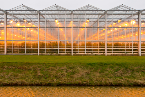 Green Lighting in Greenhouses and Agricultural Buildings